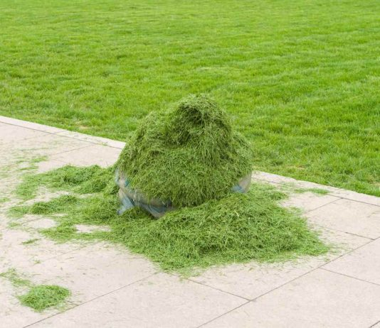 lawn grass clippings