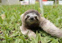 A cute sloth