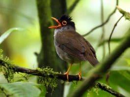 bird chirp