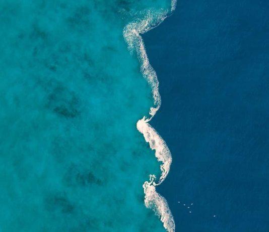freshwater saltwater estuary